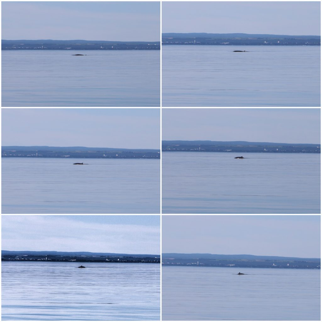 Whale in Motion